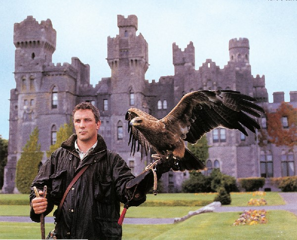 Image result for ashford castle falconry