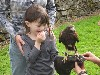 Evelyn Acton, aged 5, flying Killary on her recent Hawk Walk.