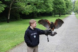 Jack McCardell flying Fomhar on the McCardell family Hawk Walk recently.