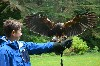 I love this great landing shot, sent in by Jodi Curtin, from the Curtin family Hawk Walk flying Samhradh & Wilde with us.