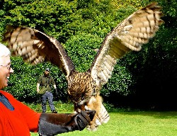 Lola Buickians flying Dingle at the end of her recent Extended Hawk Walk.