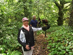 Trish & Kevin Hill flying Wilde & Stoker on their recent Hawk Walk with us.