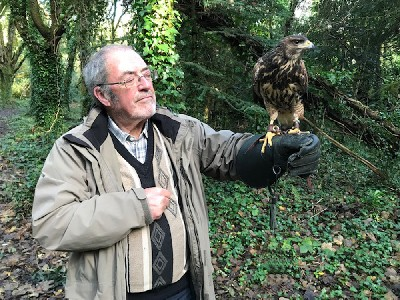 Here is little Pippin on his first Hawk Walk. He is just 4 months old but is coming along very well. Alan Kay did a wonderful job of flying him, taking good care of him on his first ever Hawk Walk.