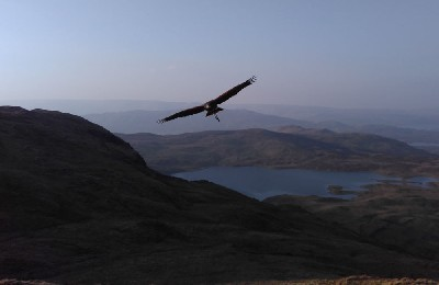Anya took this amazing photo when we flew 5 of the hawks up on nearby Mount Gable.