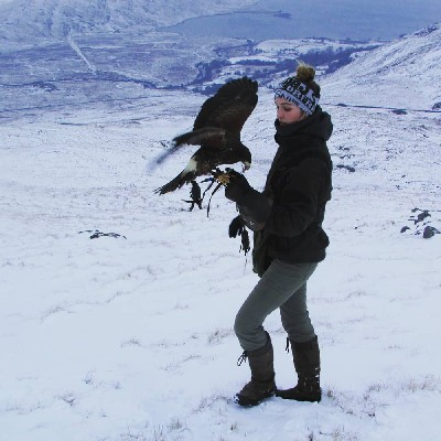 For World Falconry Day (slogan - Women Falconers) here is wonderful Danielle, one of the women falconers working here. We are very lucky to have such a great team of women falconers. Danielle is pictured on nearby Mount Gable flying one of the young Harris hawks.