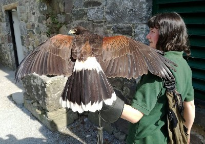 For World Falconry Day 2018 (slogan - Women Falconers) here is Mary with beautiful Maya.
