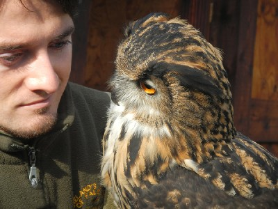 I love this wonderfully expressive photo of Joe with Dingle. Thank you to Kathleen & Rebecca for sending this great photo. Rebecca & Kathleen flew Stoker & Maya with us during their recent Hawk Walk.